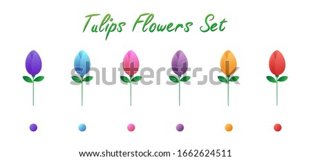 tulips flowers ser isolatd on