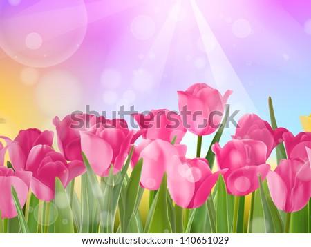 tulips growing in garden on