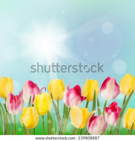 tulips in garden on blue sky