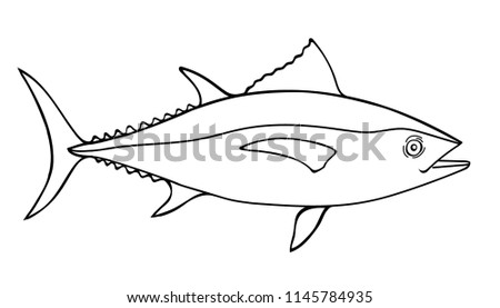 Tuna Fish Sketch Illustration, a hand drawn vector doodle illustration of a tuna fish