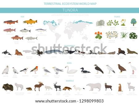 tundra biome terrestrial