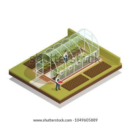 Tunnel shaped plastic greenhouse facility with workers watering  plants and fertilizing seedlings isometric composition vector illustration  ストックフォト ©