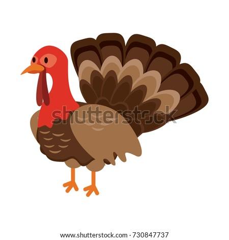 turkey animal icon image
