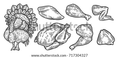 Turkey cuts, turkey parts. Domestic bird meat vector set illustration. Engraving sketch style isolated. Thanksgiving traditional american food.