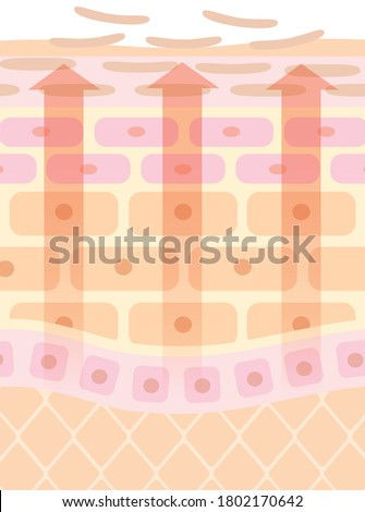 Turn exaggerated explanation illustration of skin Foto stock ©