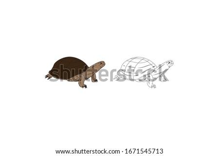 turtle animal cartoon vector