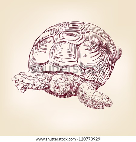 turtle hand drawn vector llustration realistic sketch
