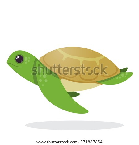 turtle image of an turtle