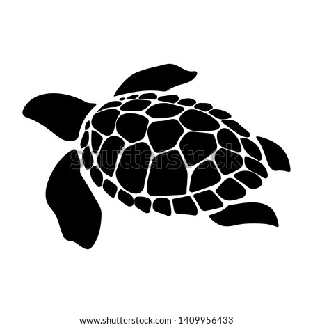 turtle marine animal