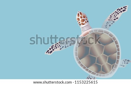 turtle swimming  water  vector