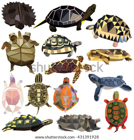turtle tortoise terrapin set