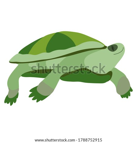 turtle vector graphic drawing