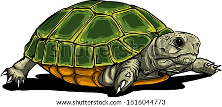 Turtle vector icon.Cartoon vector icon isolated on white background turtle. ストックフォト ©