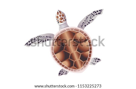 turtle  vector illustration
