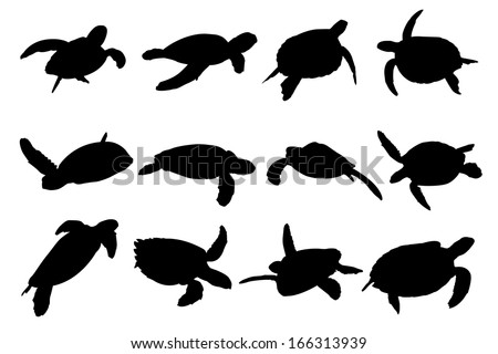 Turtle Vector Silhouettes. Collection of turtle vector silhouettes.