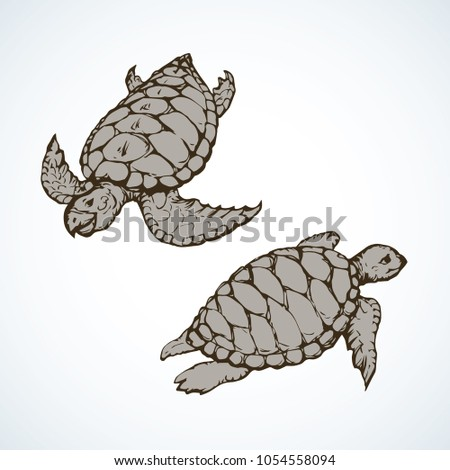 turtles isolated on backdrop