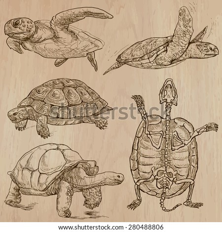 turtles  pack no1