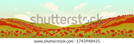 tuscan poppy field at sunrise