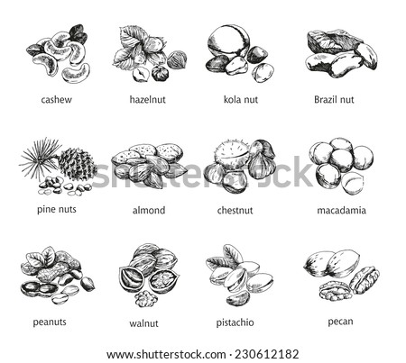 twelve kinds of nuts vector
