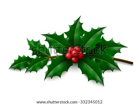 Twig of Holly with leaves and berries on white background. Vector illustration.