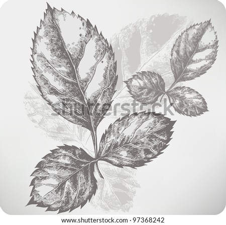 Twig with leaves of roses. Hand drawing. Vector illustration.