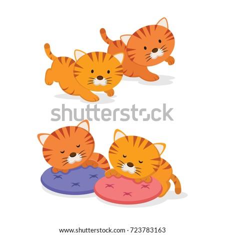 twin kittens two little cute