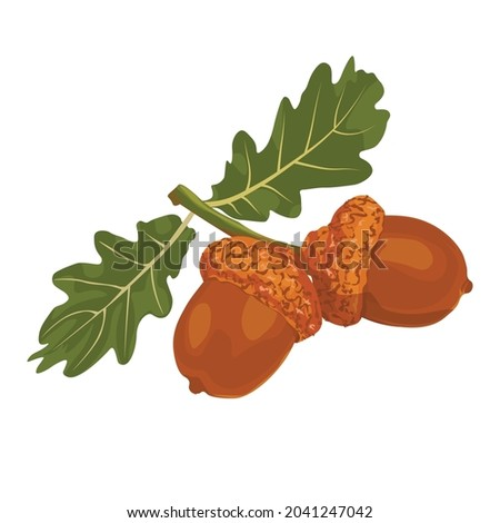 two acorns on a branch green