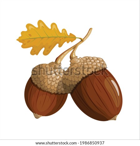 two acorns on a branch yellow