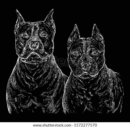 two american staffordshire