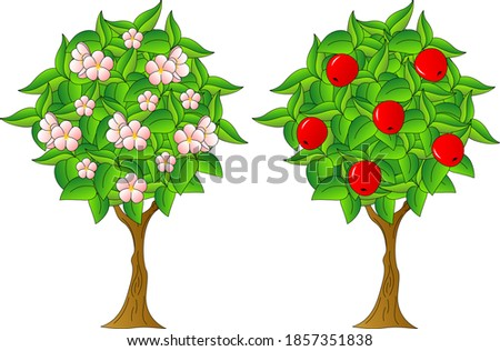 two apple trees  one flowering