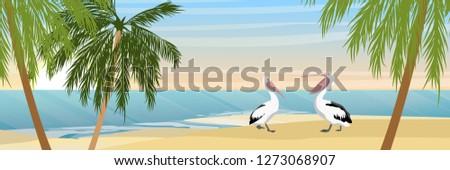 two australian pelicans on a