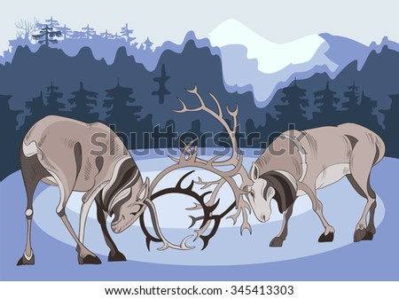 Two battling deer in the northern taiga