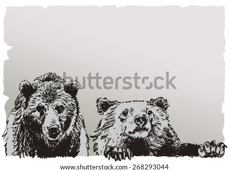 two bears  realistic drawing on ...