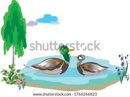 two beautiful birds   a drake