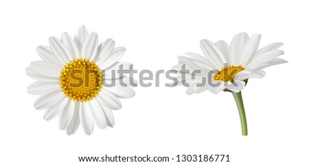 two beautiful daisy flowers