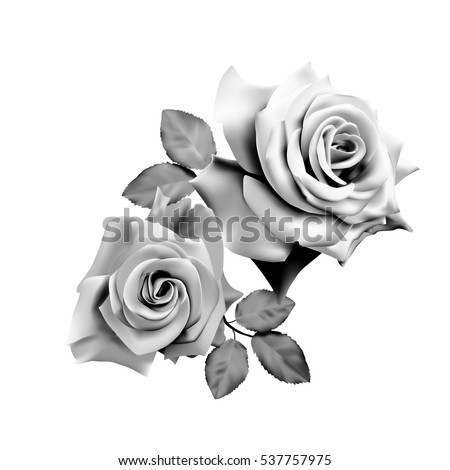 176d3f0b3 Two beautiful roses isolated on white background. Monochrome vector  illustration.