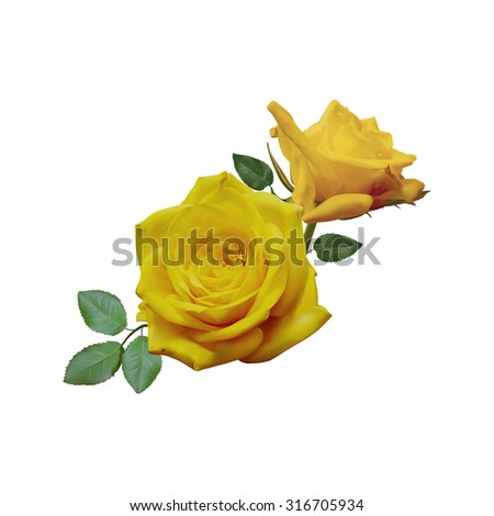 two beautiful yellow roses