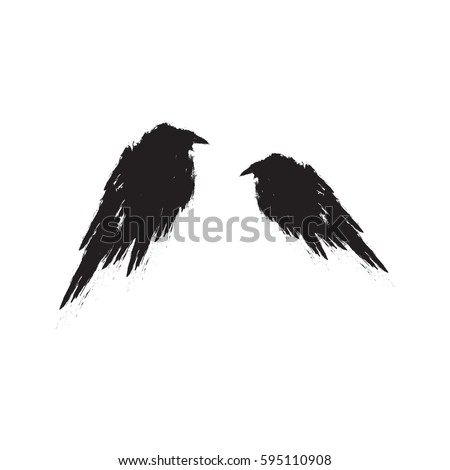 two black ravens isolated on a