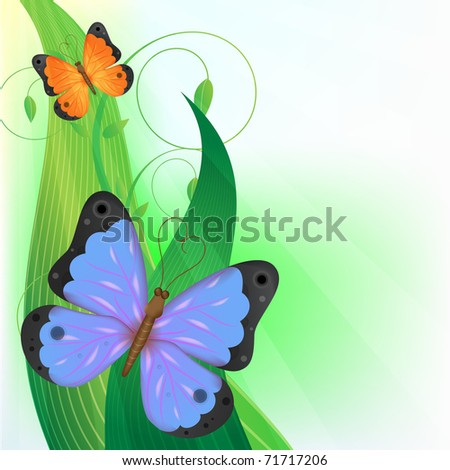 two butterfly on the grass