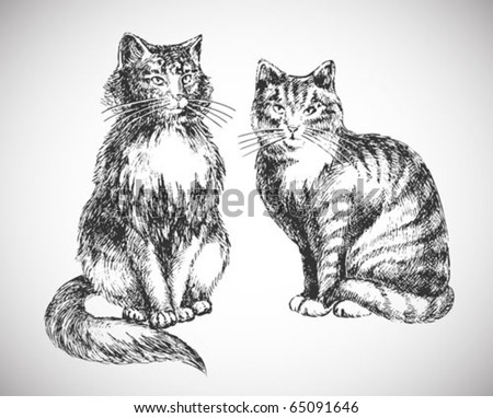 two cats realistic drawing