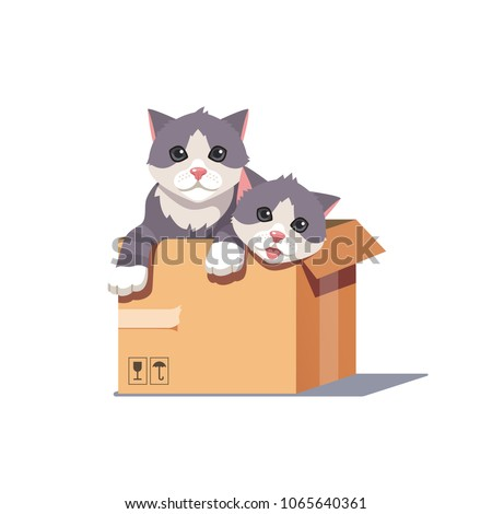 two cats sitting in a cardboard