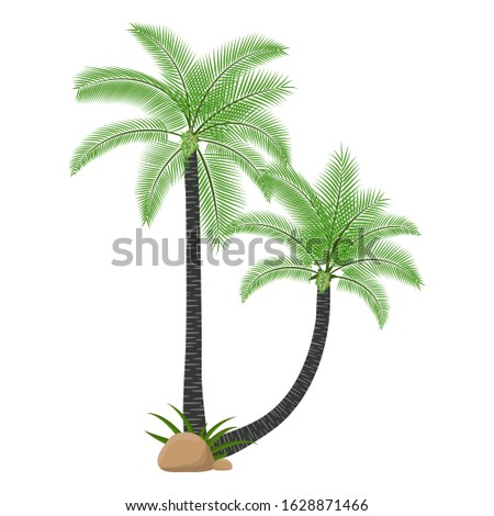 two coconut tree with branch