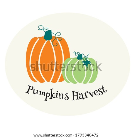 two colourful pumpkins on grey