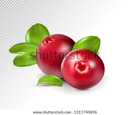 two cranberry with leaves on