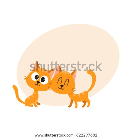 two cute and funny red cat