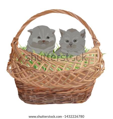two cute kittens sitting in