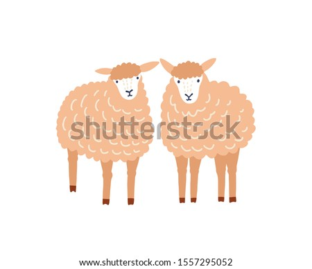 two cute sheep flat vector