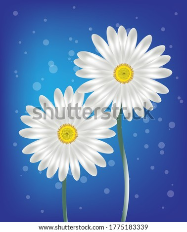 two daisies on a blue background