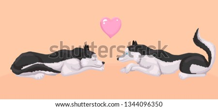 two dogs lie and look at each