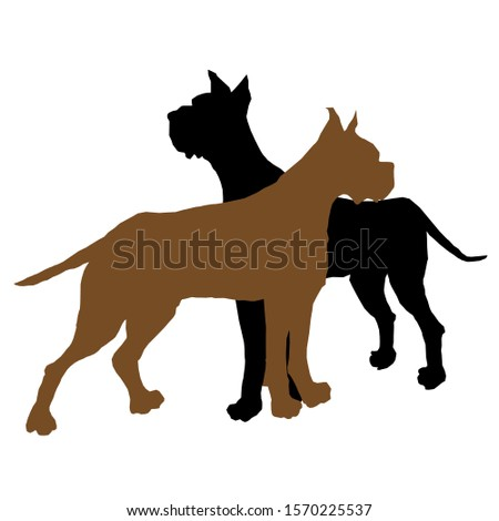 two dogs staffordshire terrier